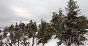 Turistika so psom: Vrch Vtáčnik a jeho vznešené okolie