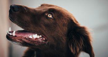Domáca zubná pasta pre psíkov