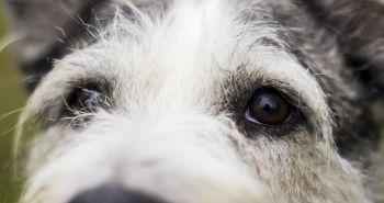 Nová štúdia ukázala, že psom sa nepáčia hrubí a neochotní ľudia