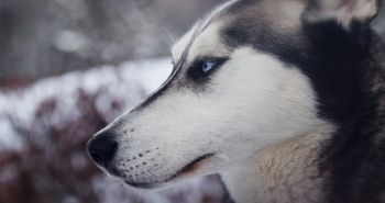 Štúdia odhalila, že prehistorickí ľudia ľúbili svojich psov