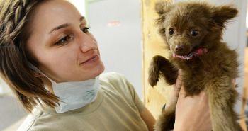 7 tipov ako vybrať pre svojho psa toho najlepšieho veterinára