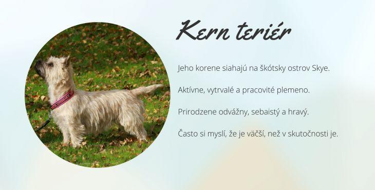 549862b895f Kern teriér (Cairn Terier