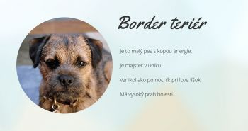 Border teriér (border terrier)