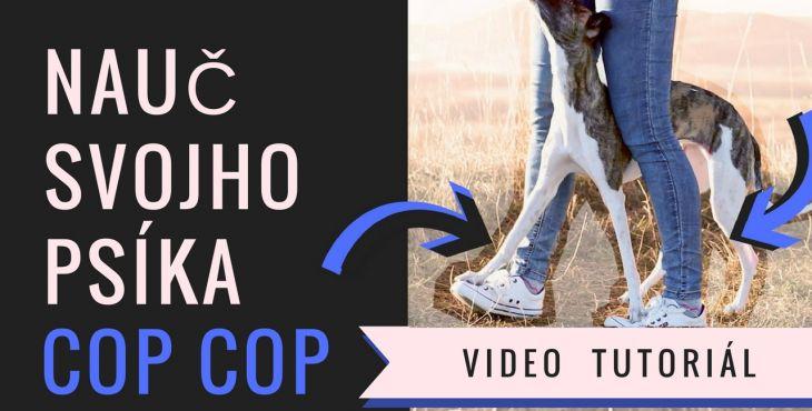 "5 spôsobov ako psíka naučiť trik ""COP COP"""