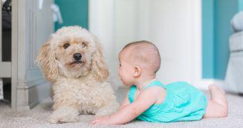 Dieťa žijúce v domácnosti so psom je zdravšie ako dieťa žijúce bez neho