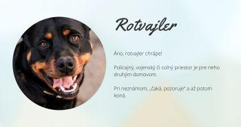 Rotvajler (Rottweiler)