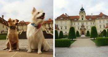 Tip na výlet so psom: Lednicko-Valtický areál