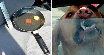 Test s vajíčkom v rozpálenom aute ti ukáže, prečo by si v ňom nemal nechávať svojho psa