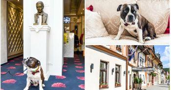 Bruno odporúča dogfriendly Hotel Hviezdoslav ****