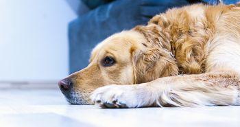 8 známok o tom, že tvoj pes sa cíti byť ignorovaný