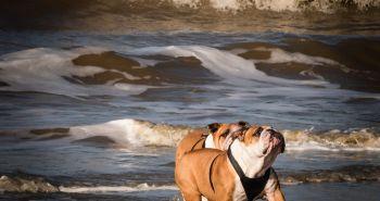 Poznáš syndróm suchého utopenia? Ako psovi zachrániť život?