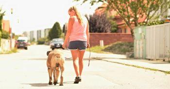 14 faktov o tom, že psy z nás robia lepších ľudí
