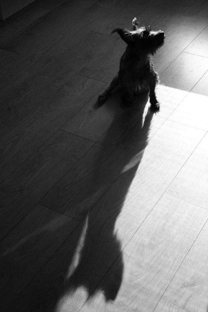 fotografia-pes