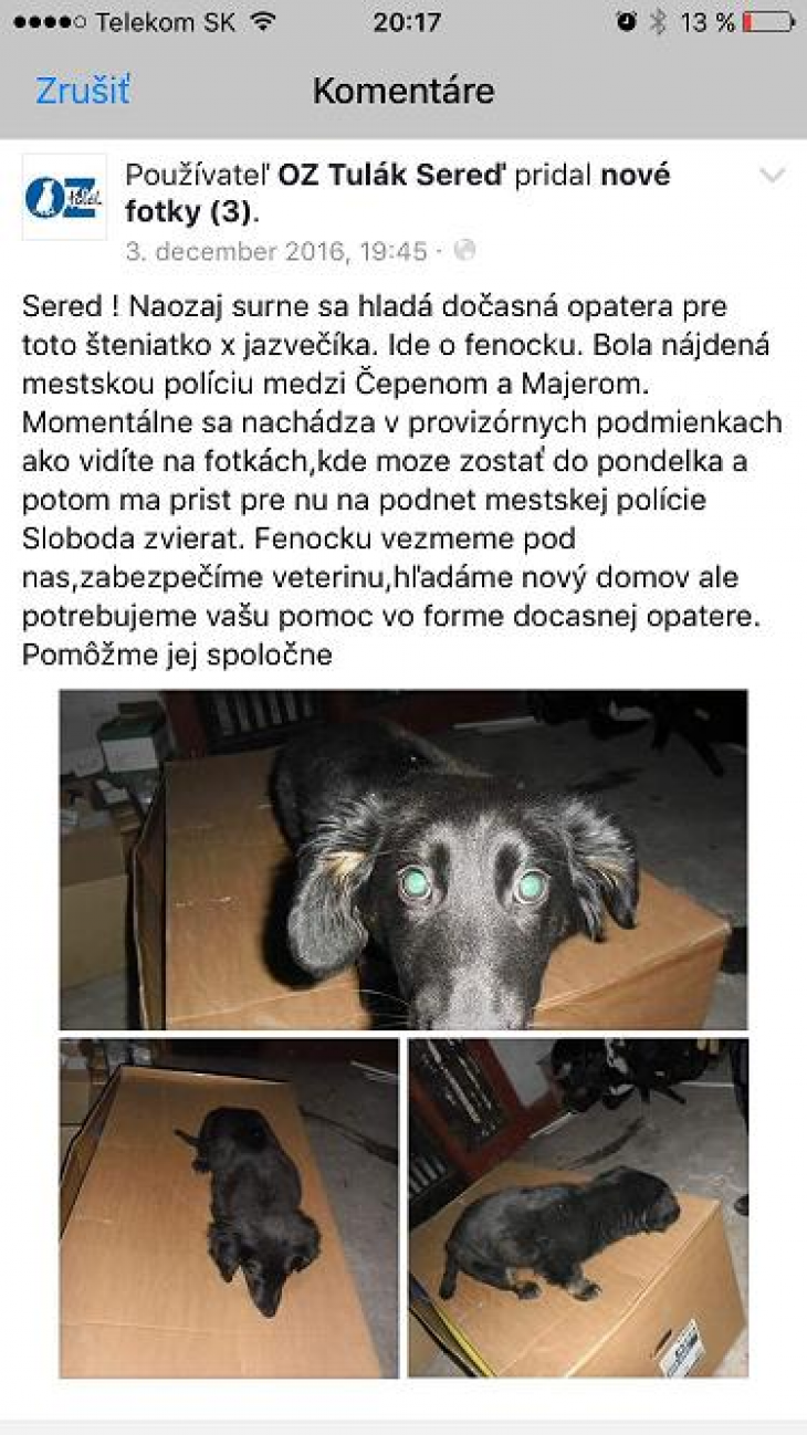 príbeh-pes-adopcia