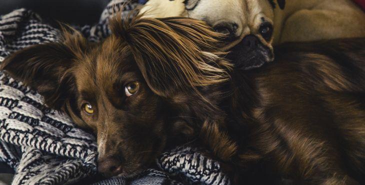 Dokážu psy čítať naše emócie?