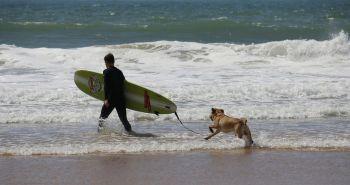 Trochu športovej exotiky - Dog surfing pre dobrých psích plavcov