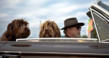 Akého psa adoptovať k staršiemu človeku?