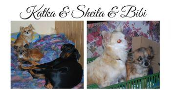 Sheila a Bibi