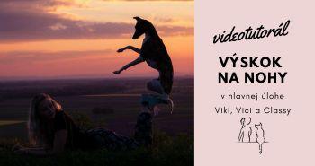 Triky so psom . Ako naučiť psa výskok na nohy?