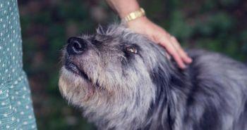 Pes vie vycítiť tvoj strach a prijať ho za vlastnú emóciu