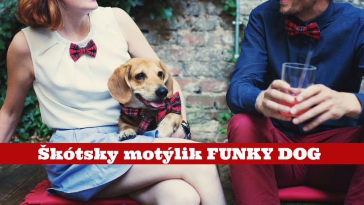 motýlik pre psa, funky dog, pes bruno