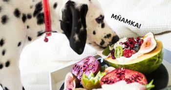 Toto jedlo by si mal zaradiť do jedálnička tvojho psa