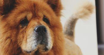 Psy sa boja, lebo sa my bojíme