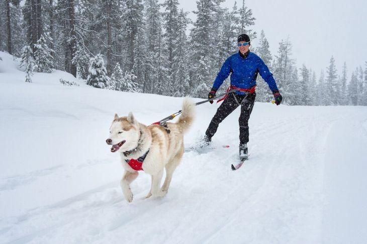 pesbruno, skijoring, postroj na skijoring, postroj pre psa, psie športy