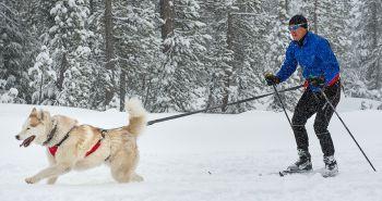 Skijöring, zimný šport pre teba a tvojho psa