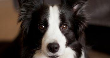 Starého psa novým kúskom nenaučíš. Pravda alebo mýtus?
