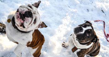 Ako správne ochrániť psie labky v zime?