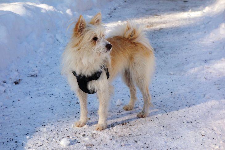 zima-ochrana-labky-pes-sneh