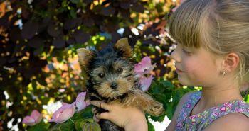 Prečo sú práve deti najčastejšie napadnuté psom?