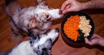 Psy kŕmené vegánskou stravou žijú zdravší život. Pravda alebo lož?