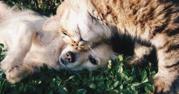Prepáčte mačky, ale vedci zistili, že psy sú múdrejšie