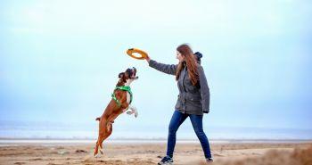 Nie je postroj ako postroj. Ako si vybrať ten správny postroj pre psa?