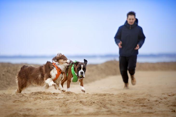 postroj pre psa, klasický postroj pre psa, postroj pre psy, front range postroj ruffwear, kvalitný postroj pre psa