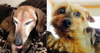 Adopcia psa ma zmenila. Už nikdy nebudem taká ako predtým