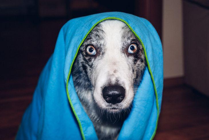 mylo, mydlo pre psov, repelentné mydlo, kozmetika pre psov, ve shandor photography, pes bruno