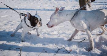 Vedci nepoznajú dôvody na rozdielne správanie sa psov a feniek
