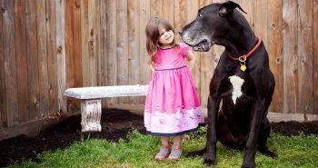 Ako správne prepočítať vek psa na ľudské roky?