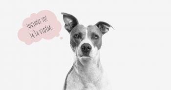 Koľko dôvodov si nájdeš, aby si psie hovienko nemusel zdvihnúť?