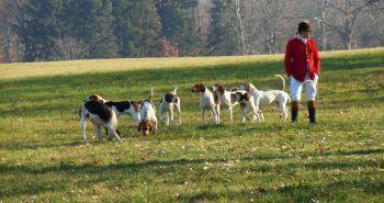 Inštinkt lovca u psa – zanedbateľná maličkosť, alebo varovný signál?