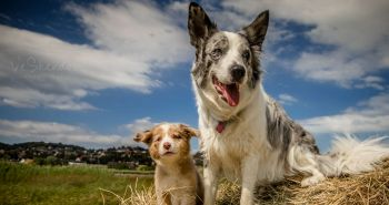 Nový štvornohý člen v rodine. Čo na to tvoj pes?