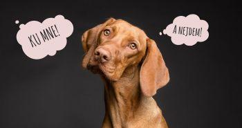 Ku mne! Tu a teraz. Ovláda tvoj pes tento povel?