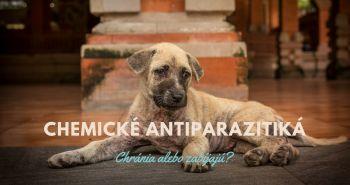 Antiparazitný obojok pre psa. Chráni alebo zabíja?