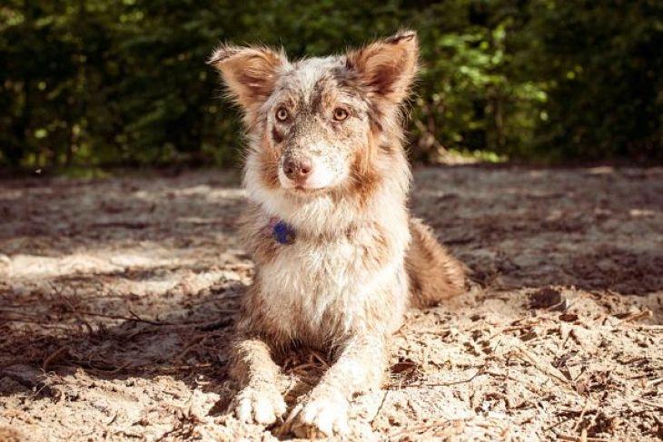 vodítko do vody, obojok do vody, gumené vodítko, gumený obojok, red dingo, pes bruno