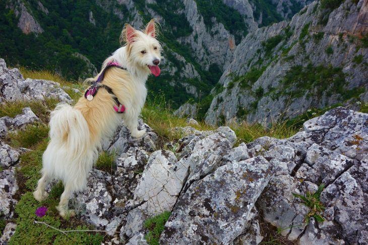 trip-vylet-dog-pes-dolina