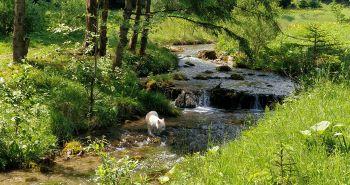 Tip na výlet so psom: Čutkovská dolina