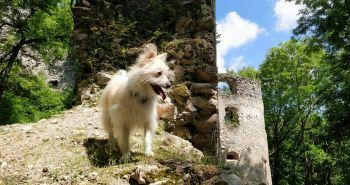 Tip na výlet so psom: Hrad Dobrá voda